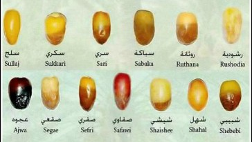 Different types of dates in Melbourne