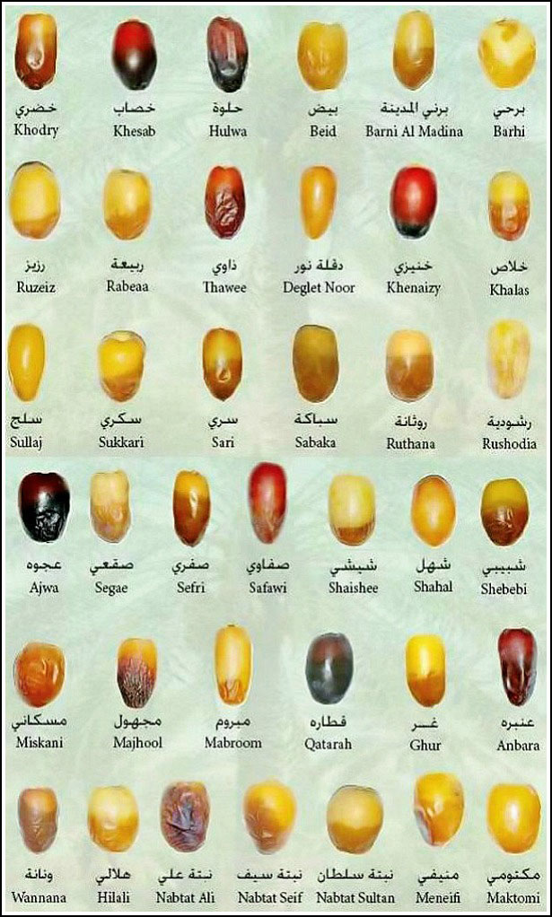 38 Types Of Dates To Break Your Fast With